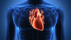 Das Herz – Alle wichtigen Infos zu Herzerkrankungen