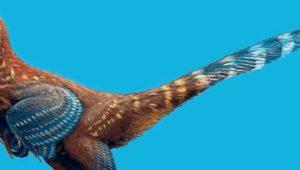Ein gefiederter, fasanenartiger Dinosaurier