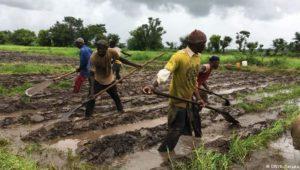 Bauern und Forscher gegen den Hunger