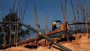 Bolsonaro nimmt den Regenwald ins Visier