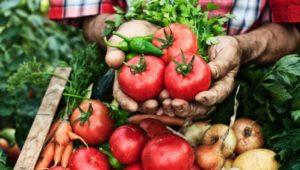 """Tim Spector über darmgesunde Ernährung: """"Wir sollten essen wie ein Gärtner"""""""