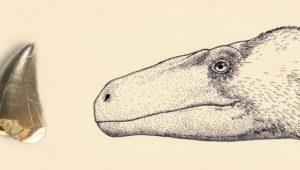 Raubsaurier in Norddeutschland